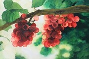 Grapes On The Vine       11x17
